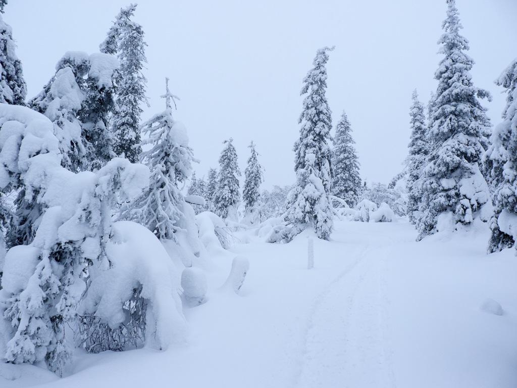 Tag 25: Der Aurora-Trail