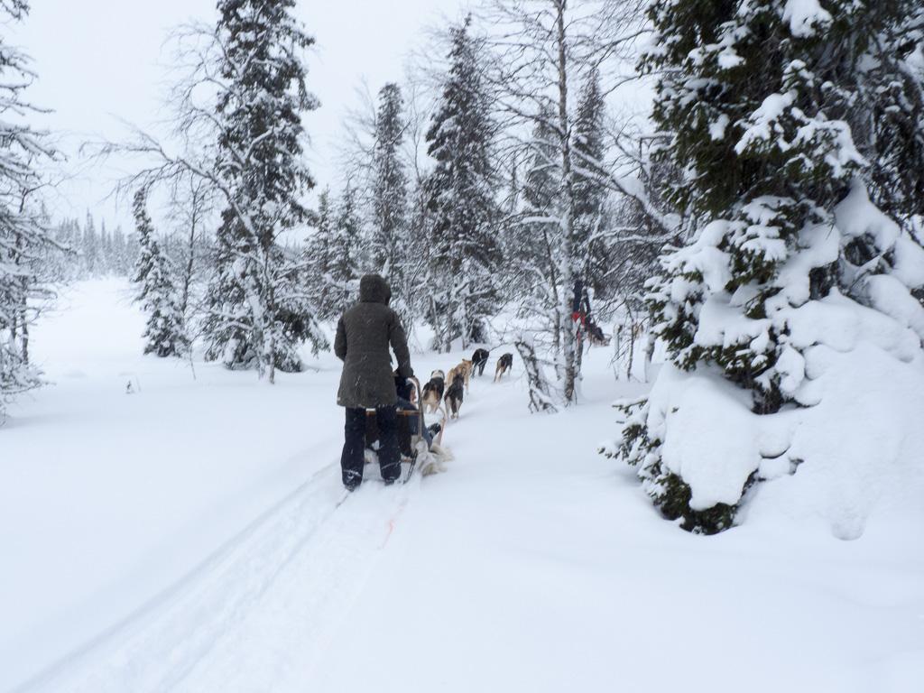 Tag 25: Hundeschlitten auf dem Aurora-Trail