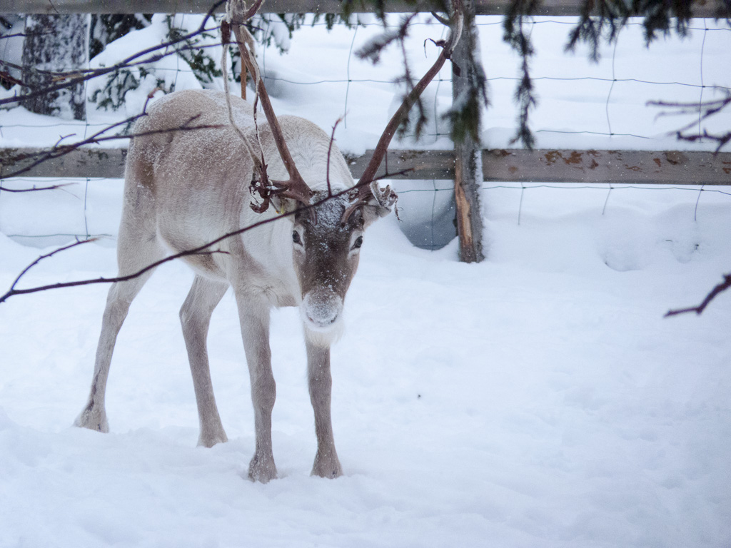 Tag 26: Rudolf