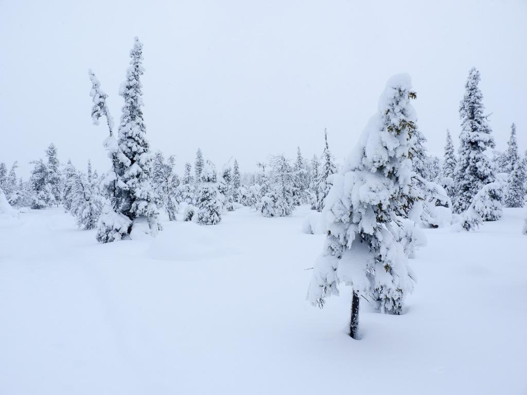 Tag 27: In Schneeschuhen an den Berg
