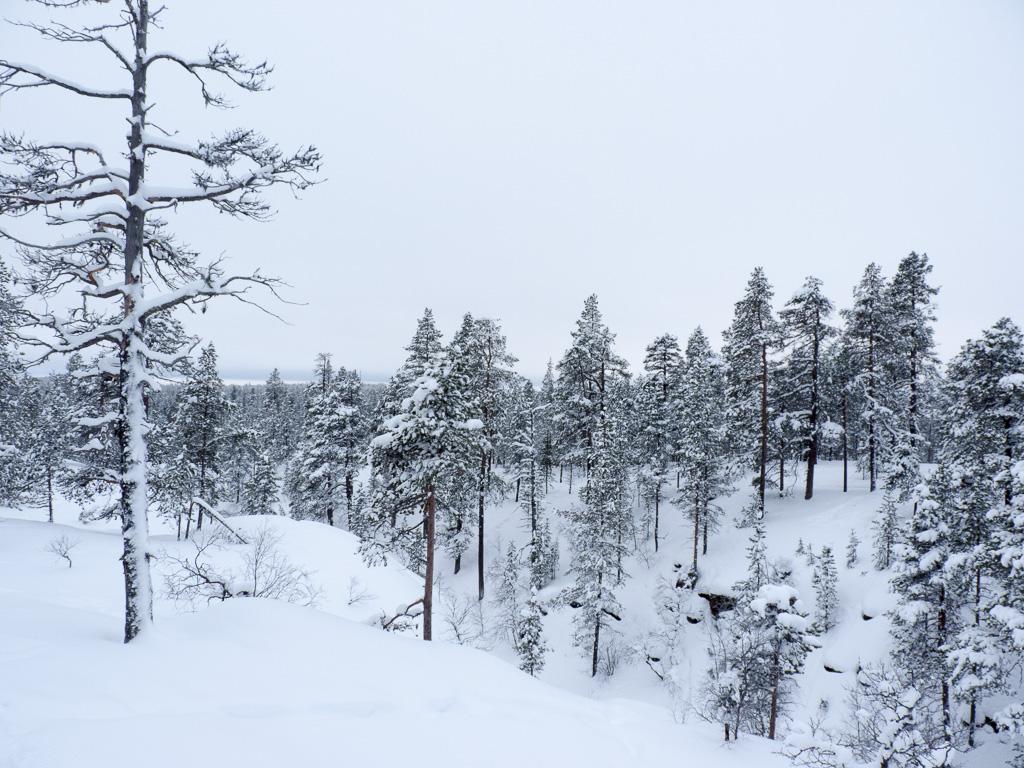 Tag 28: Spaziergang in Saariselkä
