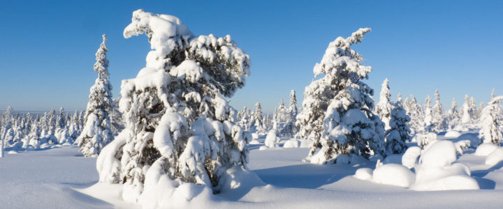 Tag 28: Super-Sonntag mit Sonne, Ski und Saariselkä