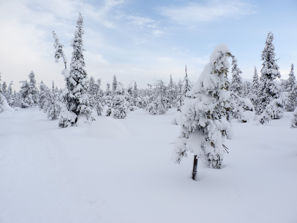Tag 30: Auf dem Aurora-Trail